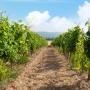 Comment réussir un investissement vignoble à Saint-Tropez ?