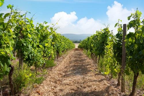 un investissement vignoble à Saint-Tropez